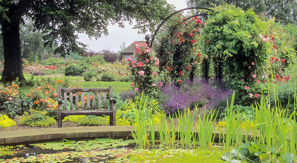 A secluded bench provides the view across the central pond of the Royal National Rose Society Gardens in Hertfordshire, UK.