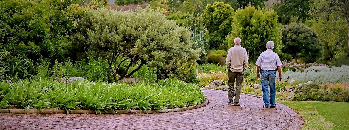 Two gentlemen stroll together down a long, leafy path.